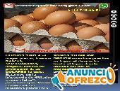 Huevos al mayor, Huevos tipo A grandes seleccionados